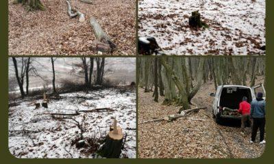 Hoți de lemne din Pădurea Florești-Tăuți, prinși în urma sesizărilor clujenilor.  Se caută rangers voluntari