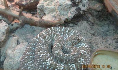 Mai multe reptile de la Vivariul Universitații Babeș-Bolyai din Cluj au fost furate de un bărbat de 35 de ani