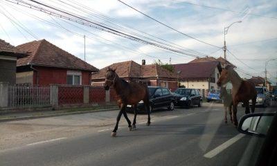 Efectele izolării, verificate și la Cluj! Oamenii stau acasă, iar animalele invadează străzile