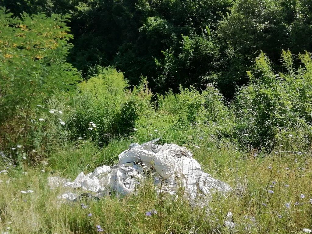 Adrian Dohotaru: Munți de gunoaie și tăieri ilegale în pădurea Făget