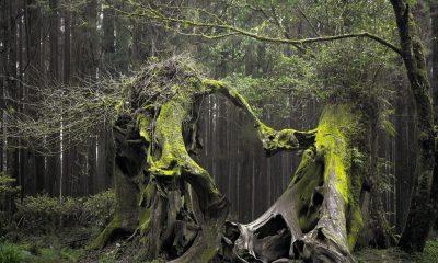 Cea mai horror pădure din lume se află la Cluj. Turiști din toată lumea vin să vadă cel mai înfricoșător loc de pe planetă