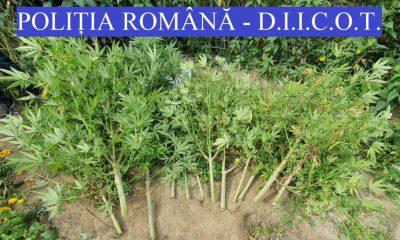 Percheziții anti-drog la Cluj. Doi traficanți au fost reținuți