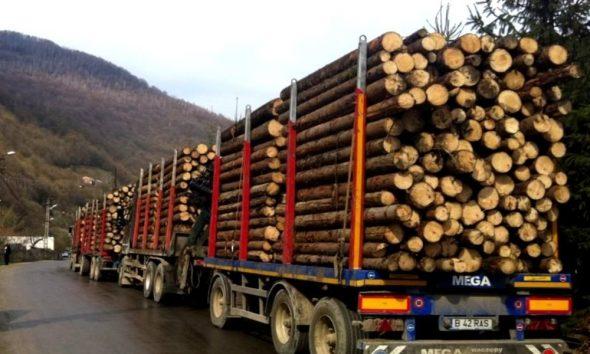 Polițiștii clujeni au confiscat 10 tone de lemne dintr-un transport ilegal