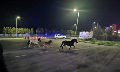 """Caii de pe Drumul Național din Florești, subiect de bancuri: """"Cred că erau în galop spre centrul de vaccinare"""" / """"Aveau declarație?"""""""