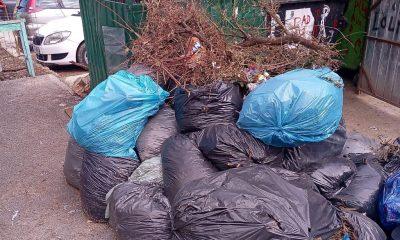 Municipalitatea plantează copaci în grădinile din cartiere, dar îi lasă pe clujeni cu gunoiul vegetal în drum cu săptămânile