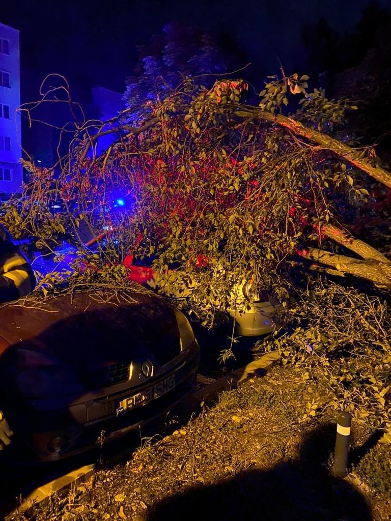 Un copac doborât de vânt a DISTRUS două maşini marţi seara la Cluj-Napoca